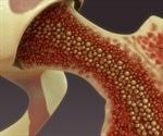 How Do Skeletal Stem Cells Form Bones?