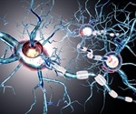 Small Animal Imaging Brings Insight to Neurodegenerative Disease