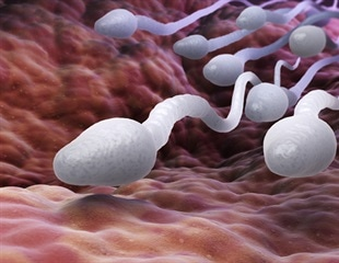 Diet affects sperm and the health of offspring