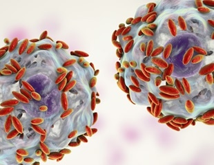 Microbiome could help identify pre-cancer risk in women with HPV