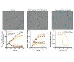 Neuronal and Microglial Analysis for Alzheimer's Disease Models