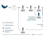 Scientists use genomics and bioinformatics to analyze blueprint of novel coronavirus