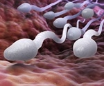 Faulty Sperm and Frequent Miscarriages