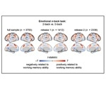 Brain activity reveals working memory capabilities of children