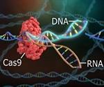 New rapid CRISPR-based test for sensitive SARS-CoV-2 detection