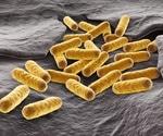 E. coli as a Model Organism