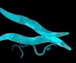 C. elegans as a Model Organism
