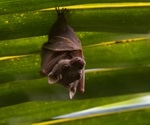 Study shows broad geographic and evolutionary dispersal of betacoronaviruses from African bats