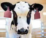 Human trials to commence using SARS-CoV-2 antibodies from cow's blood