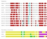 Genome comparisons between SARS-CoV-2 and other betacoronaviruses yield applicable insights