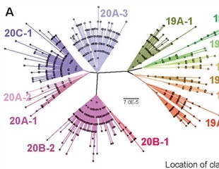 Study shows recombination among SARS-CoV-2 strains is already occurring, but remains rare