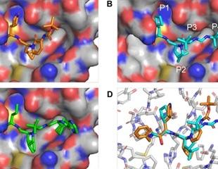 New drug candidate suppresses SARS-CoV-2 replication
