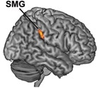 Time-sensitive neurons get worn out and skew time perception, shows study