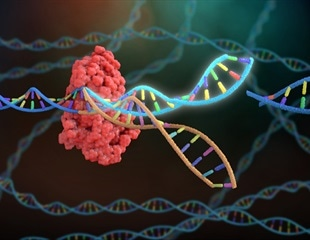 CRISPR screening identifies human host pathways that facilitate coronavirus infection