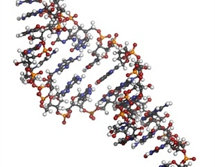 Discovering a molecule that could interfere with SARS-CoV-2 replication