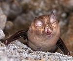 Susceptibility to SARS-CoV-2 infection varies across bat species