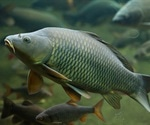 Potential sea animal reservoirs for coronaviruses?