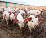 Susceptibility of domestic pigs to SARS-CoV-2