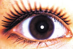The eyes are not only a mirror of a soul, but also a medical record. Their thermal radiation can indicate a disease even before clinical signs appear.