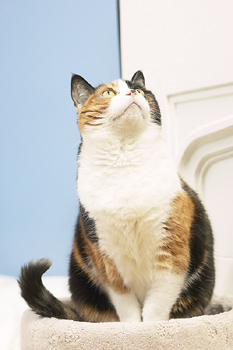 Andrew Saxon, M.D., and a team of researchers at University of California, Los Angeles (UCLA) have found that a molecule designed to block cat allergies can prevent allergic reactions in laboratory mice and was also successful when tested on human cells in a test tube.