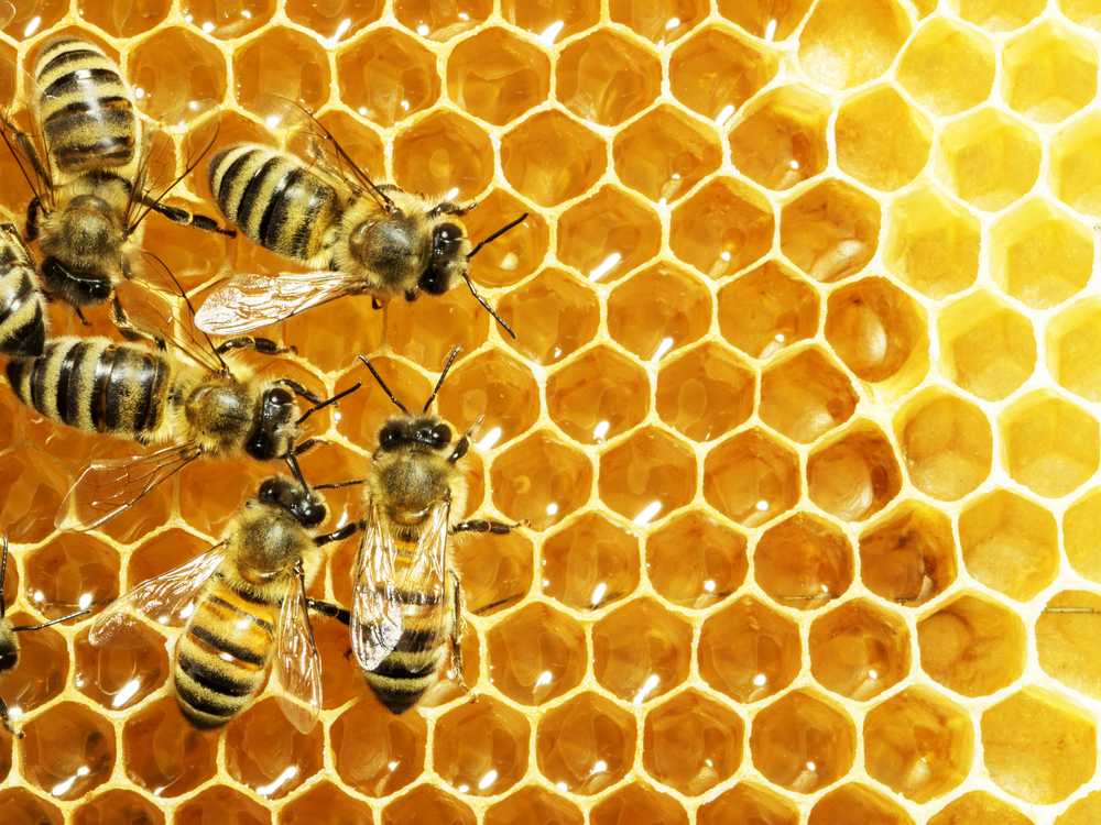 Webinar Overview: Understanding How NMR Can Help to Prevent Honey Fraud