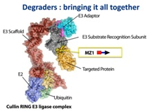 Progress in Targeted Protein Degradation and Degrader Development